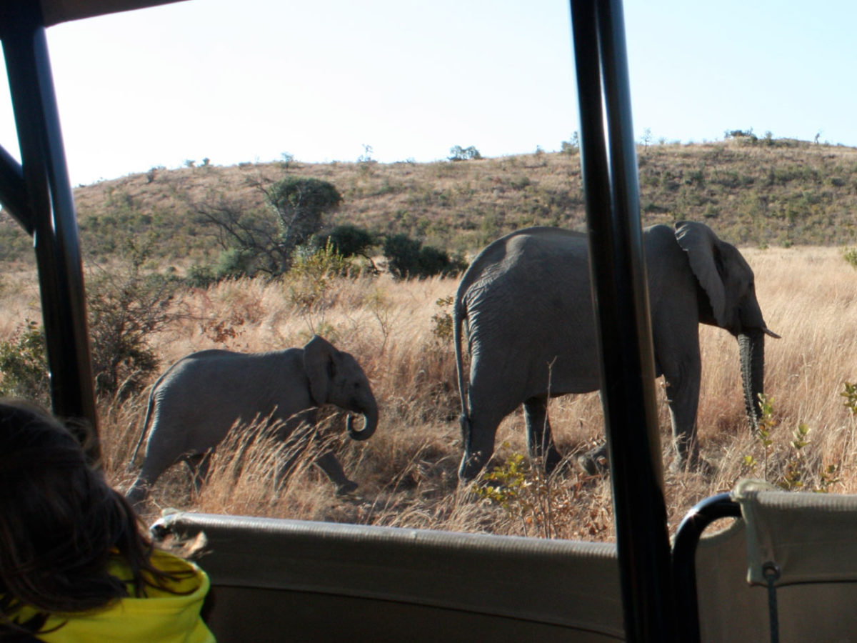 The Pilanesberg Game Reserve