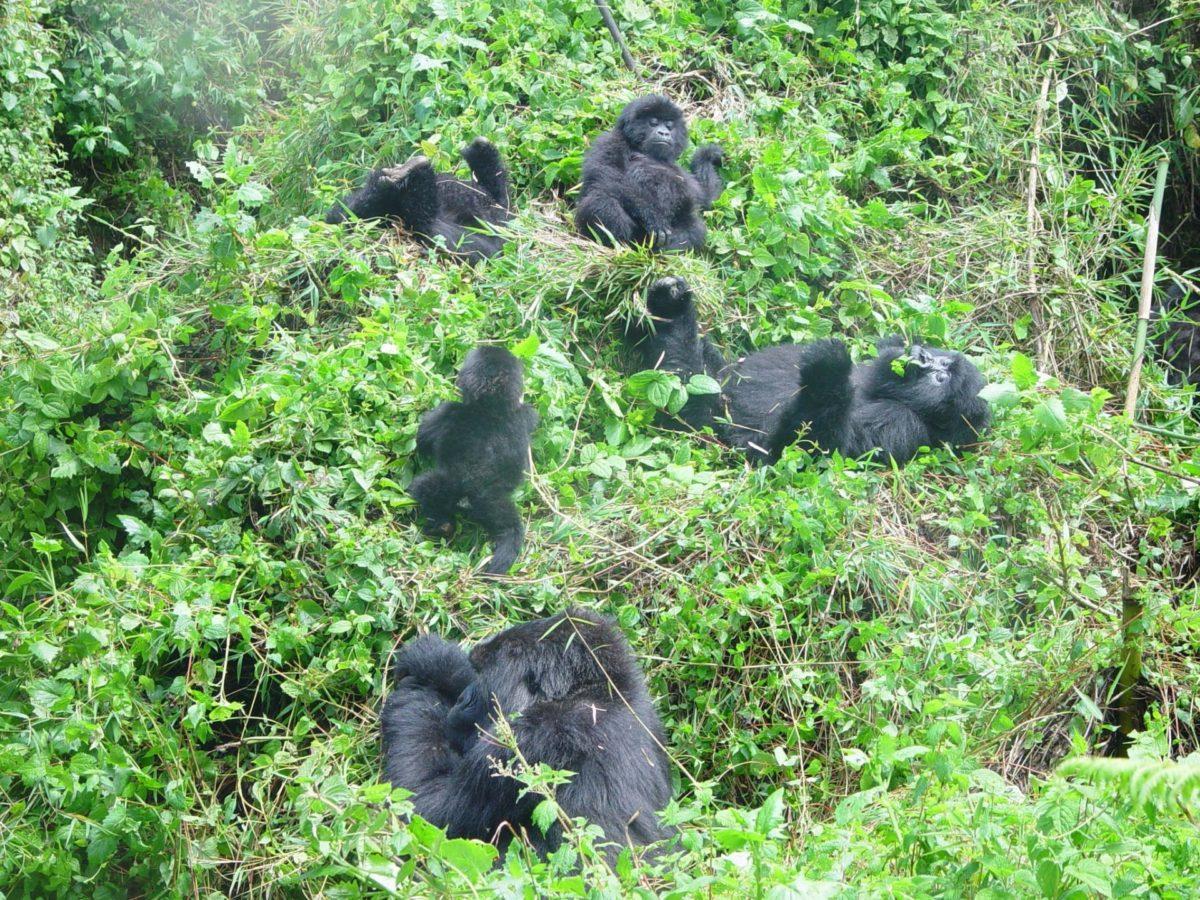 Rwanda News